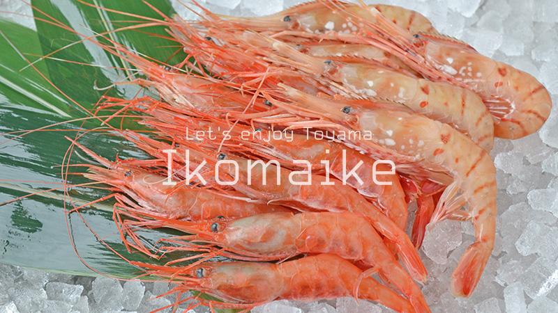 富山の海鮮グルメ甘エビと富山エビ